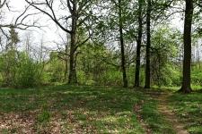 Wilcza Wola - okolice dworu